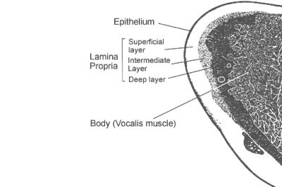 anatomische afbeelding stemband